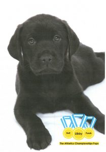 Guide dog for the blind sponsored by Laser Vision Scotland
